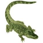 croco-150x150 dans Livre des Sagesses