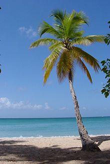 220px-1859-Martinique.web
