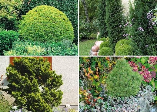 coniferes-jardin-l750-h534-c