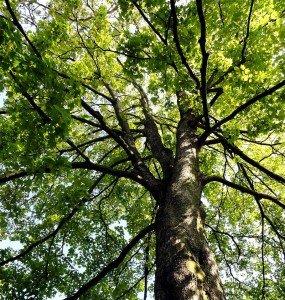 nous sommes des arbres