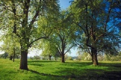 nation des arbres
