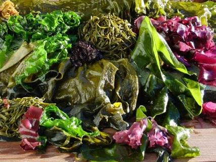 Algues-fraîches