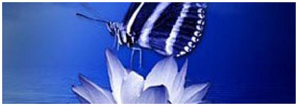 Secret papillon
